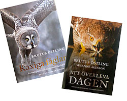 Brutus Östling books